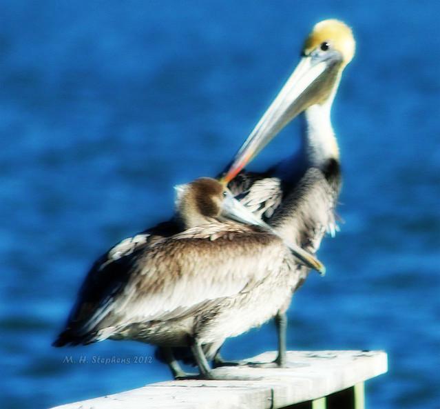Pam S Pelican Bed Breakfast