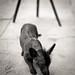 Cuba 14:  The Funky Dog
