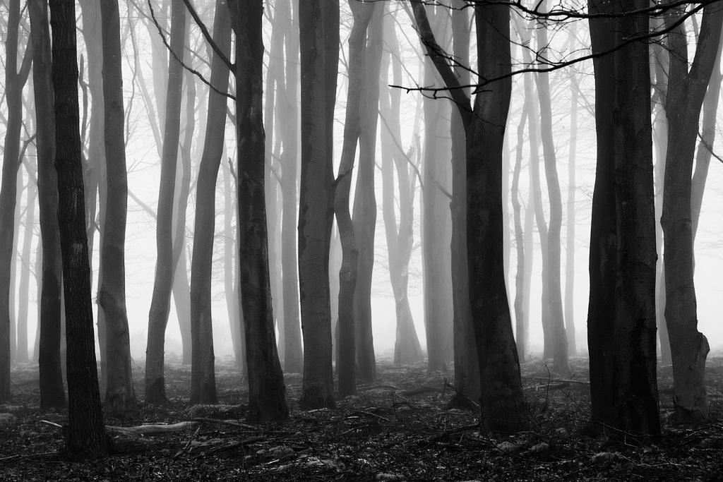 Dark Forest Landscape ...