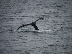 Whale tail 1