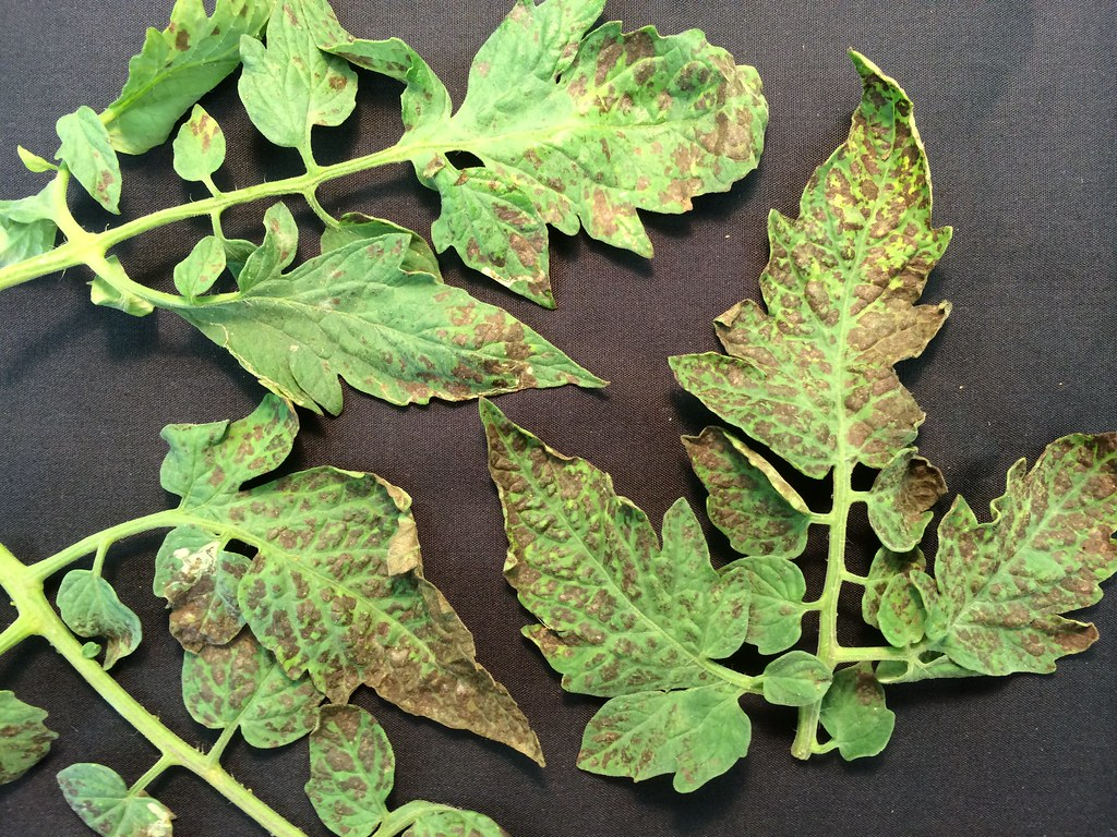 Watch How to Control Aphids video