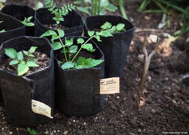 Root Pouch | Grow Pot