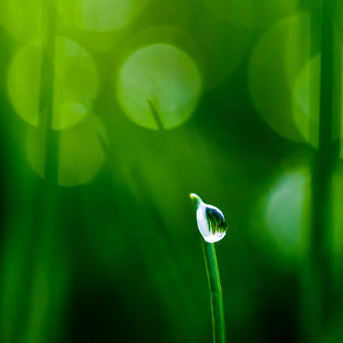 A drop of bokeh | by Steve-h