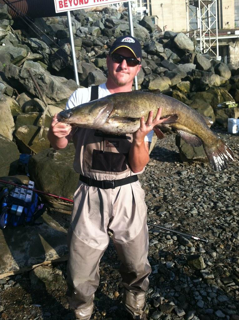 Flathead catfish courtesy of don goff maryland for Md dnr fishing