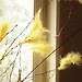 Yellow feathers in my Easter twigs