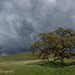Blue oak, dark skies (Sierra Foothills)