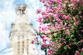 Soldier Statue Sculpture Austin Texas State Capital Crepe Myrtle 37620 | by Dallas Photoworks