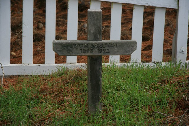 Skelton s grave lies near pine trees behind a white picket
