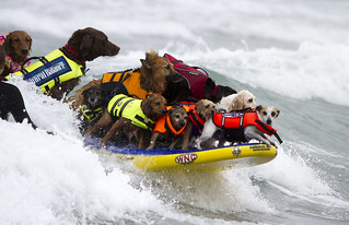 World Record set - 17 dogs surfing at one time! | by San Diego Shooter