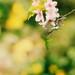 Sakurablur