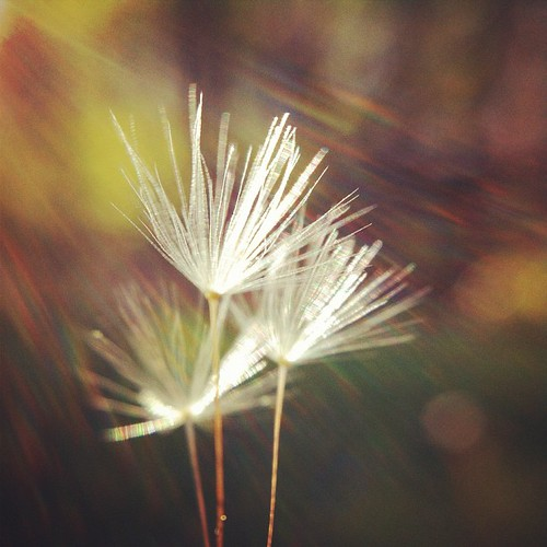 shine on | by lucy.loomis