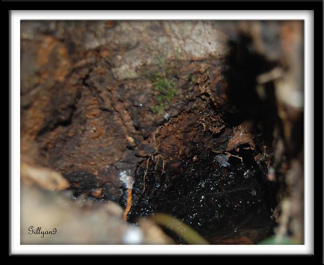 Petit Trou Dans Le Bois - Dans un petit trou d'arbre Flickr Photo Sharing!