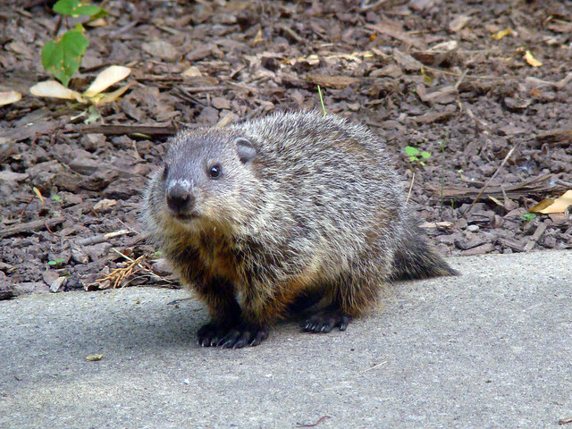 Show On Groundhogs Day Kids