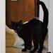Cats_0002_-Edit.jpg