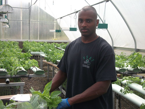 A veteran and participant of the Veterans Sustainable Agriculture Training program handling living basil at an organic hydroponic farm