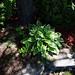 garden (8) 2012