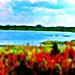 Okefenokee-Swamp-Lake