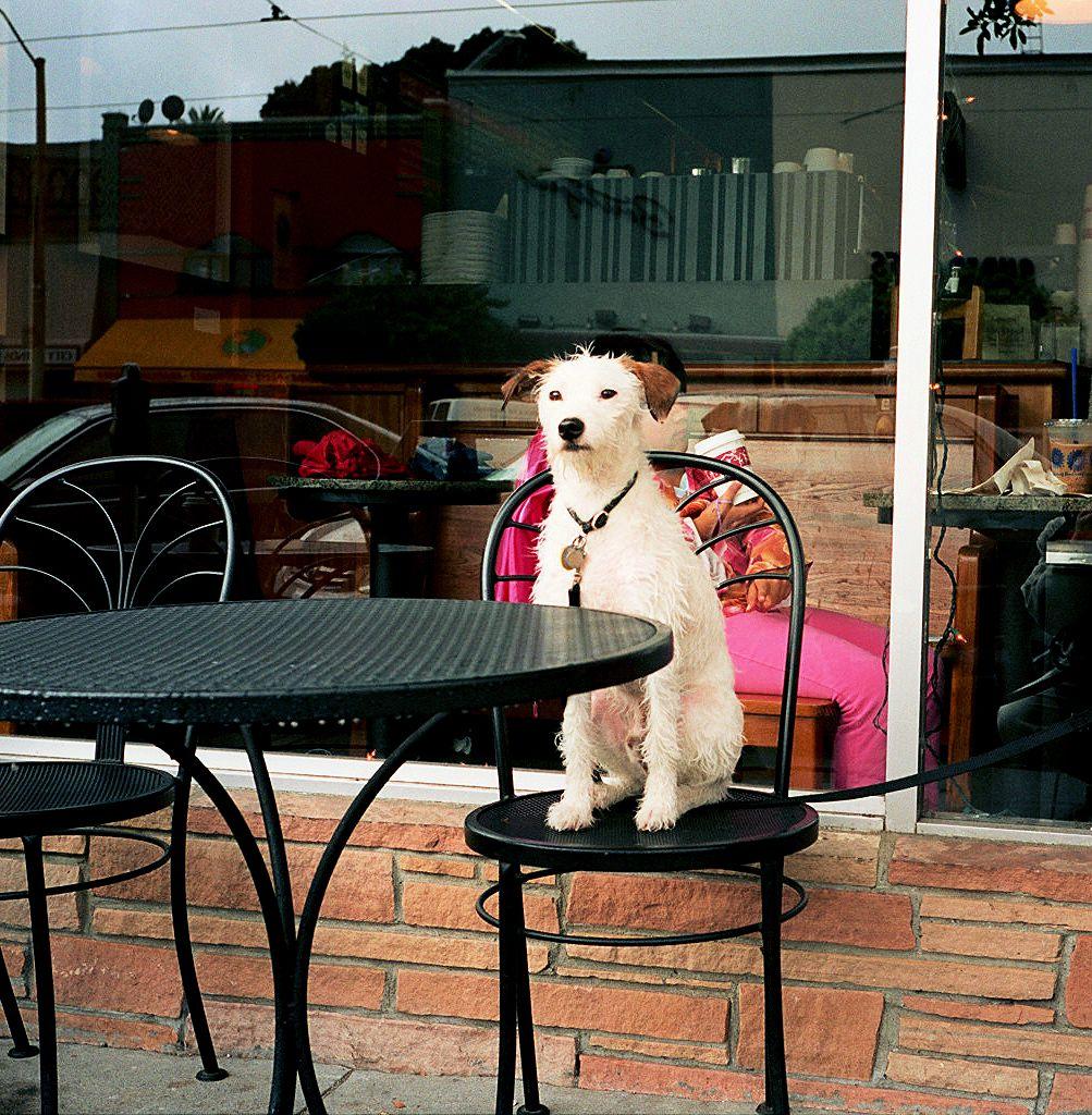Dog Friendly B B St Agnes
