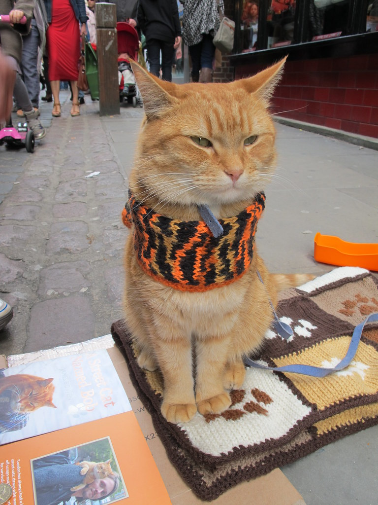 Street Cat Named Bob Dvd Film Length