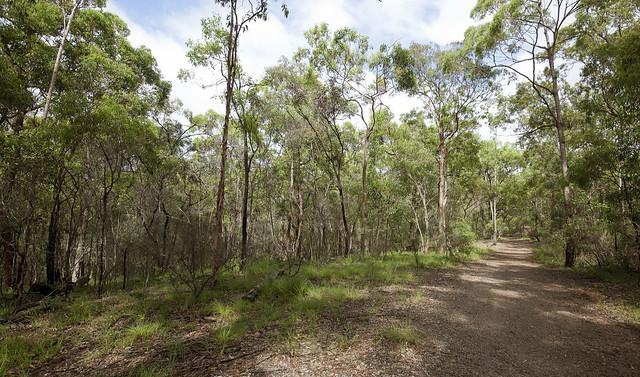 Seven Hills Bushland Reserve