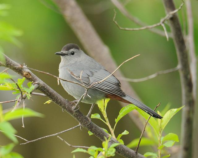 2012 05 06 Montrose Point Bird Sanctuary 9 Flickr
