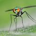 green metallic fly