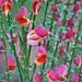 Des petites fleurs en couleurs ~ Small colored flowers