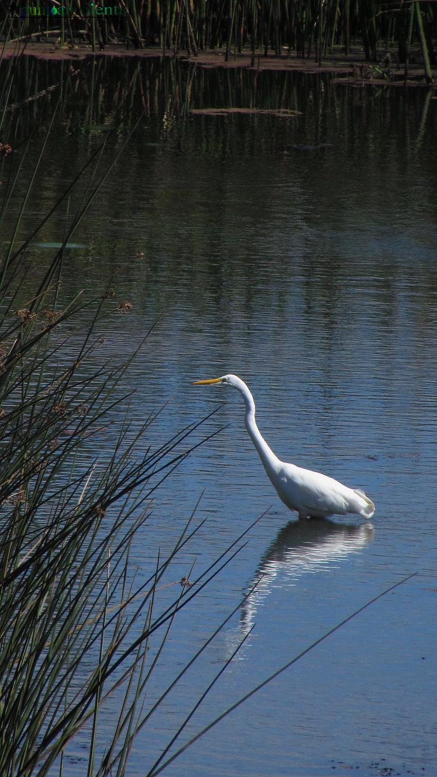 Garza Blanca Grande Garza Blanca Grande 2 | Flickr