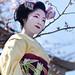 Chasing Geisha #1