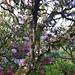 Check out that lichen
