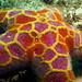 Mosaic Sea Star