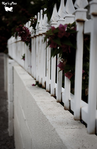 White Fence | by Katheryn Navas
