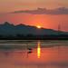 Sunset & flamingo