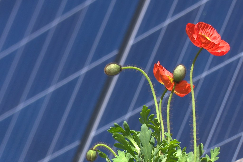 Flowers growing next to a solar panel