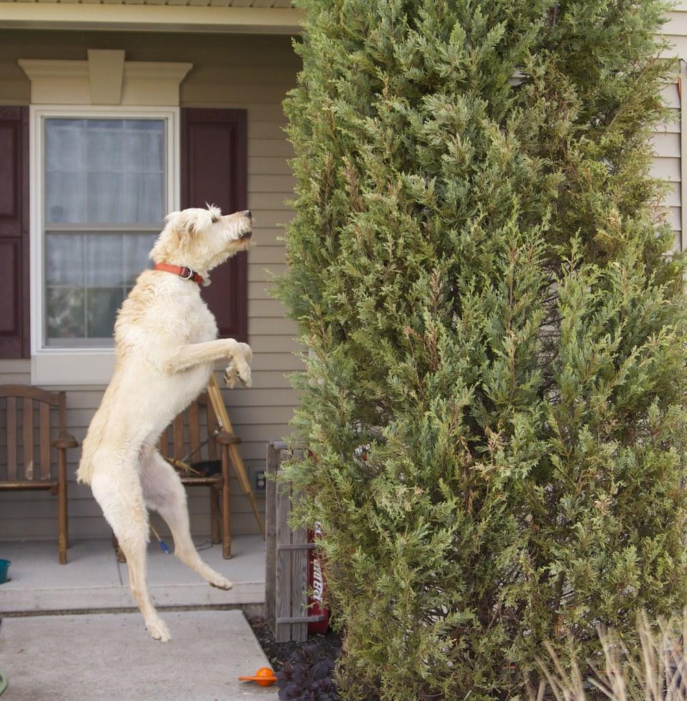 A Dog Chasing A Cat
