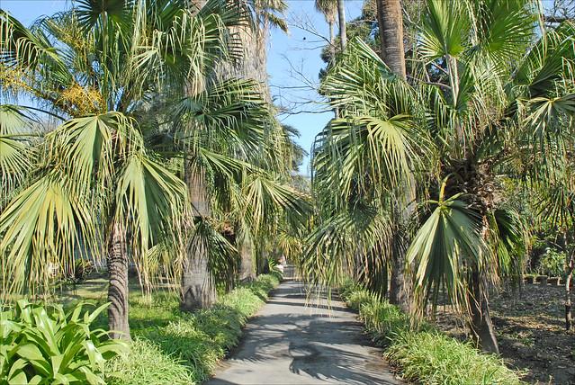 Le jardin botanique de palerme l 39 all e des palmiers for Camping le jardin botanique limeray