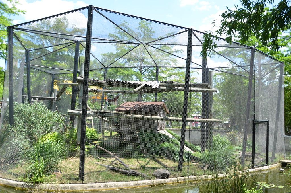 Little Rock Zoo  Little Rock Arkansas  Primates