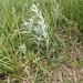 WRTG11M BK  2012-05-23 at 12-47-18 Prairie sage