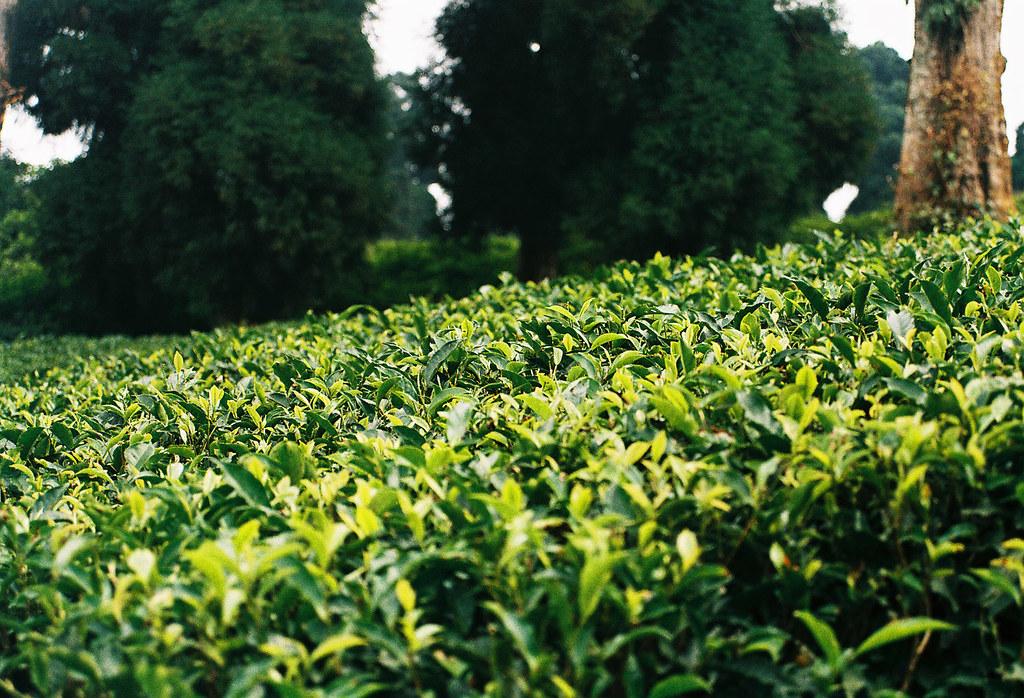 The Garden Tea Room Newquay Tr