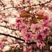HBW ~ Gorgeous Spring