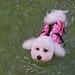 River Pup