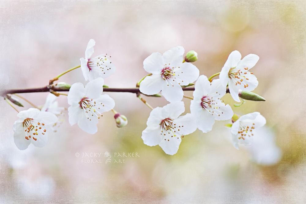 Photograph Spring Awakening by Jacky Parker