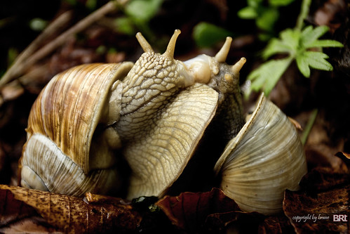snails_in_love | by alamond