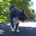 Richie, the most photographed cat in Katoomba