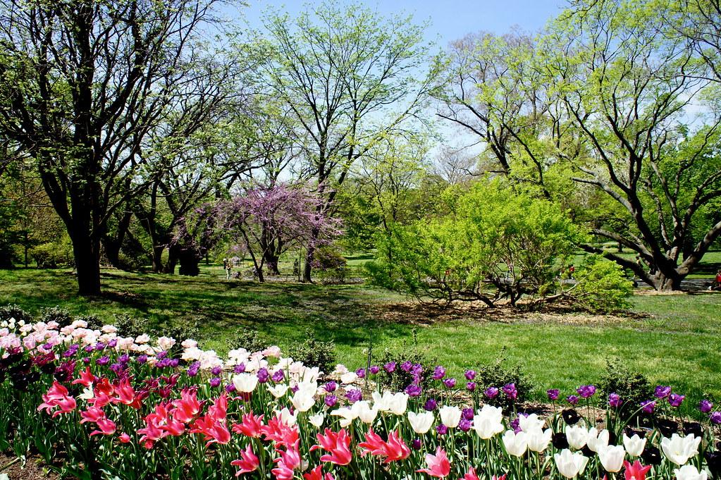 Brooklyn Botanical Gardens Tulips Marcia Daniel Quinn Flickr