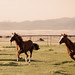 Two Horses Running With Sleeping Giant