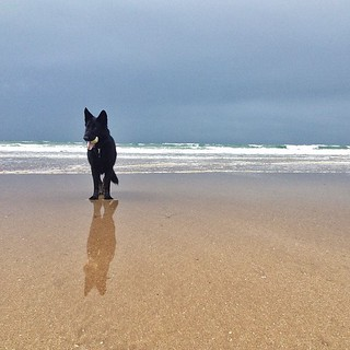 Miss Charley 'soaking up' the beautiful beach at Woolacombe. | by The Logo Smith