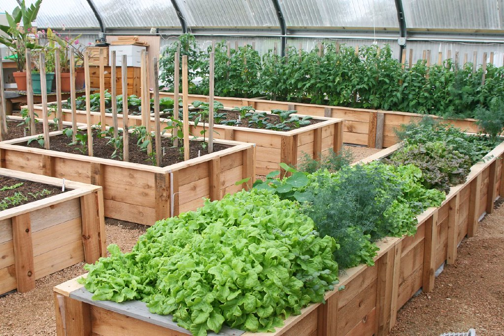 Greenhouse Raised Beds Carol Flickr