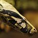 Portrait of a snake...