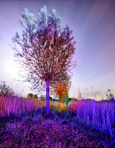 Light painted trees in Park de Hoven, Dordrecht, NL - Double exposure, fused | by ConzNL